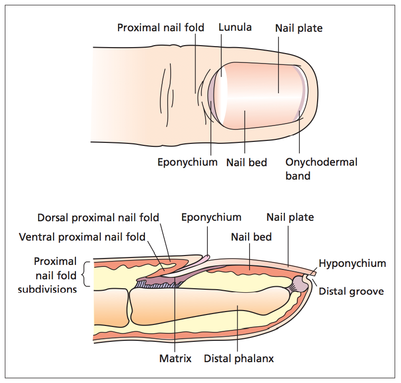 Wound Care Resource | Anatomy and Physiology of Skin Summary