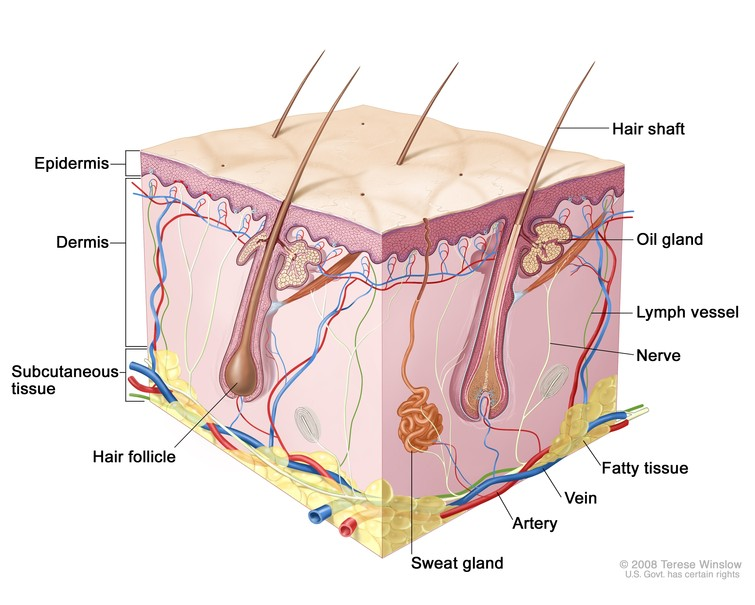 Wound Care Resource Anatomy And Physiology Of Skin Summary